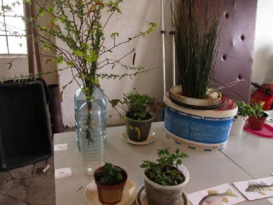 Poznávačka rostlin